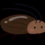 効果的なゴキブリ対策!