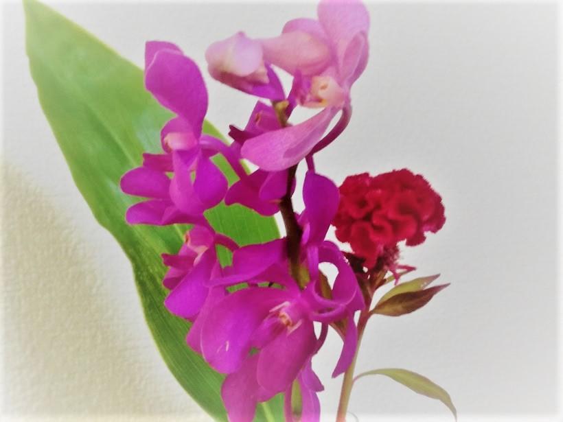 ブルーミーライフ 花のサブスク